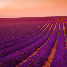 Sunset over the lavender field,  by Tomas Vocelka - Landscapes Prairies, Meadows & Fields ( provence, fragrance, europe, sunset, tourism, france, travel, lavender, smel, valensole, rows, filed )