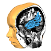 Brain Tutor 3D APK