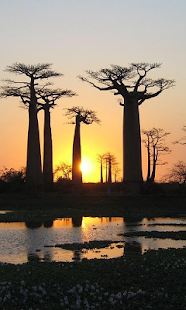 Baobab Wallpapers- screenshot thumbnail