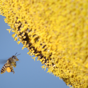 Fly to The Sun(Flower) by Sudarmanto Edris - Animals Insects & Spiders
