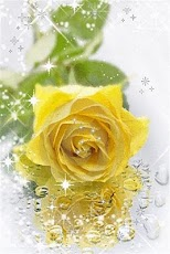 yellow roses with water drops - photo #29