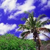 Ogasawara Islands Vol.2
