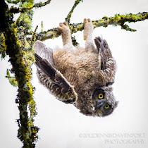 Pacific Northwest Wildlife