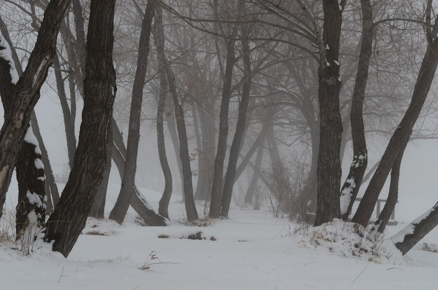 A foggy morning. by Denton Thaves - Landscapes Forests ( nature photography, forest )
