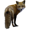 Fox Sticker icon