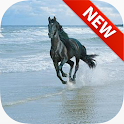 Wild Horse Wallpapers icon