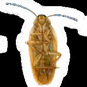 Roaches Live Wallpaper