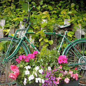 Flower power by Jim Moran - Flowers Flower Arangements ( ride, bike, village, flowers, wood.,  )
