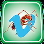 ANT Vimeo Video Free