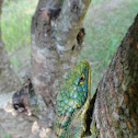 escorpión verde