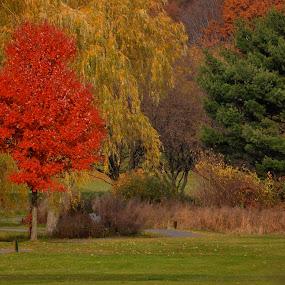 Fall Colors by Miren Etcheverry - Uncategorized All Uncategorized ( orange, red, tree, autumn, foliage, colors, fall )