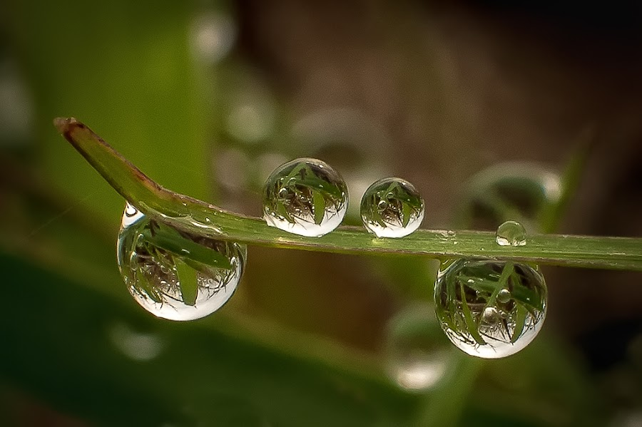 natural dews  dews in the dews by Kawan Santoso - Nature Up Close Natural Waterdrops