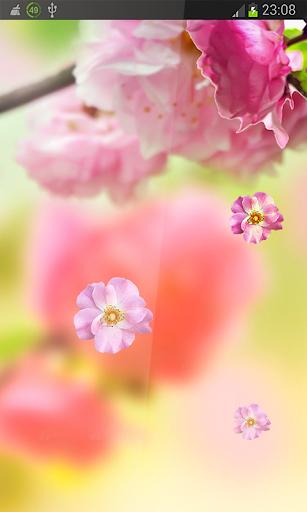 Sakura HD LWP