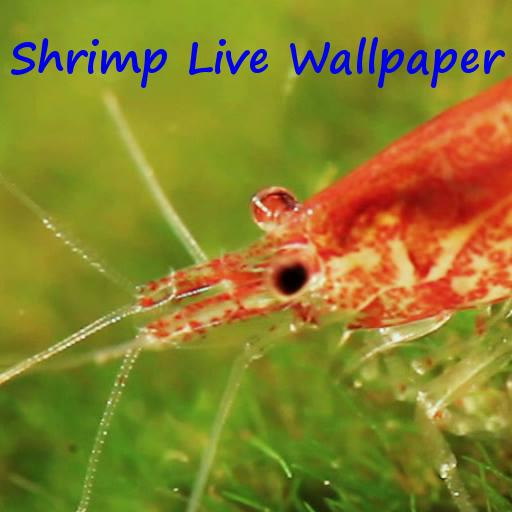 Shrimp Live Wallpaper