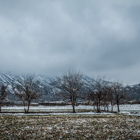 SNOW Fall  by Murtaza Haider - Landscapes Weather