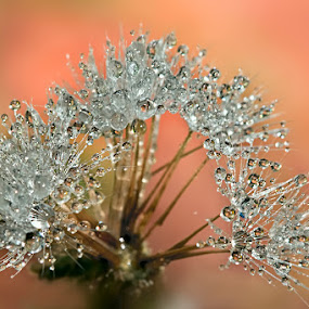 by Carlos De Sousa Ramos - Nature Up Close Other Natural Objects