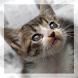 猫くるくる 画面をくるくるすると猫写真が次々と