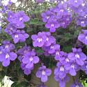 Hanging purple flowers