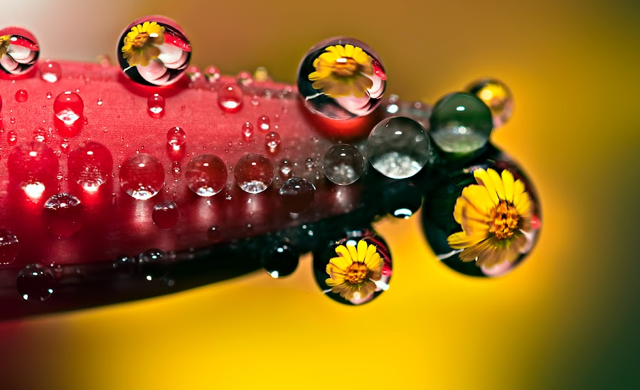 by Carlos De Sousa Ramos - Nature Up Close Other Natural Objects (  )