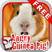 Angry Guinea Pig Free!