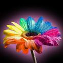 Happy Gerbera logo