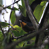 Yellow-throated tanager