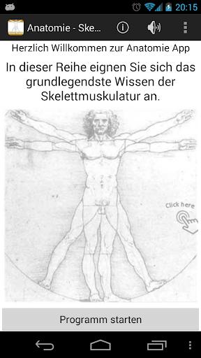 Anatomie - Skelettmuskulatur