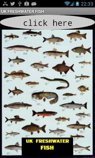 UK FRESHWATER FISH