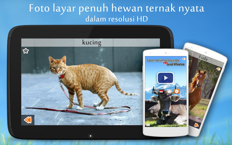Suara Binatang Ternak Apl Android Di Google Play