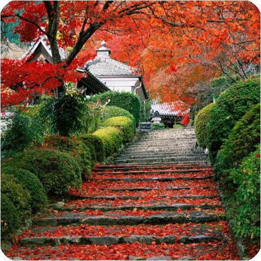 Autumn Leaf Live Wallpaper LOGO-APP點子