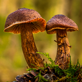 Shrooms by Peter Samuelsson - Nature Up Close Mushrooms & Fungi