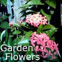 Garden Flowers icon