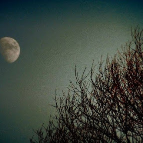 Moon over Trees by Nat Bolfan-Stosic - Landscapes Starscapes ( moon, winter, cold, trees, branches )