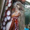 Pacific Northwest octopus