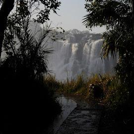 Path to the Fall by DJ Cockburn - Landscapes Forests ( zimbabwe, livingstone, waterfall, zambia, victoria falls, path, forest, zambezi, africa )