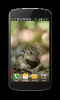 Screenshot of Little Chipmunk 3D Wallpaper