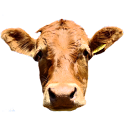 CowCam Deluxe logo