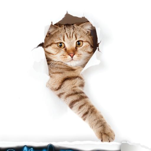 解謎必備App|Cute Cat Sounds LOGO-綠色工廠好玩App