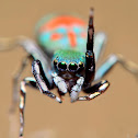 Metalic Green Jumping Spider