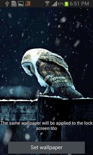Snowy Owl Live Wallpaper