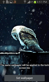 Snowy Owl Live Wallpaper