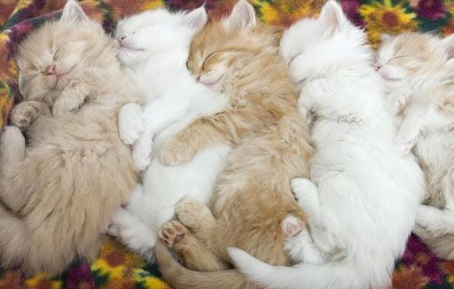 Sleeping Cat Wallpapers HD