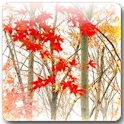 Maple Leaf Live Wallpaper for Android™