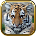 Baby Animal Games icon
