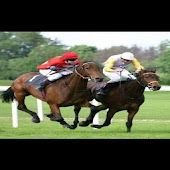 HORSE RACING TIPS MP