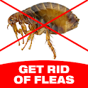How To Get Rid Of Fleas icon