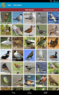 UK Birds Sounds Free - screenshot thumbnail
