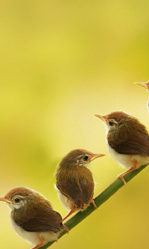 Birds HD Live Wallpaper