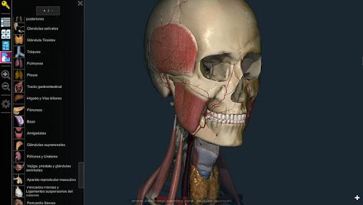 Anatomy Learning - 3D Atlas - Revenue & Download estimates - Google ...