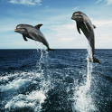 Dolphins HD live wallpapers icon